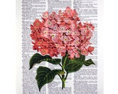 Pink Hydrangea on a Vintage Dictionary Page