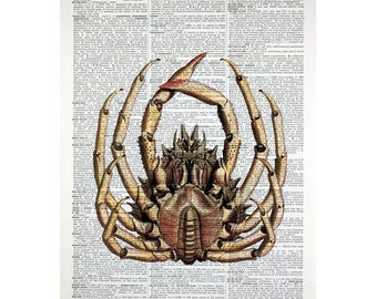 Tanner Crab Belly on a Vintage Book Page