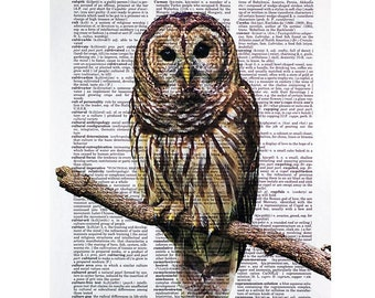 Barred Owl Vintage Print On An Antique Dictionary Page