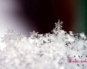 Single Snowflake - fine art print (8x10)