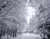 Snowy Path - fine art print (8x10)