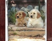 CLEARANCE: Blank Note Card - Golden Moment - Golden Retrievers, Dogs, Puppies, Dog Lover