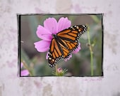 CLEARANCE - Blank Note Card - Single Card - Legend of the Butterfly