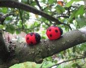 two tiny ladybugs