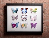 Papillons Graphiques Volume 02. The Graphic Butterfly Collection.