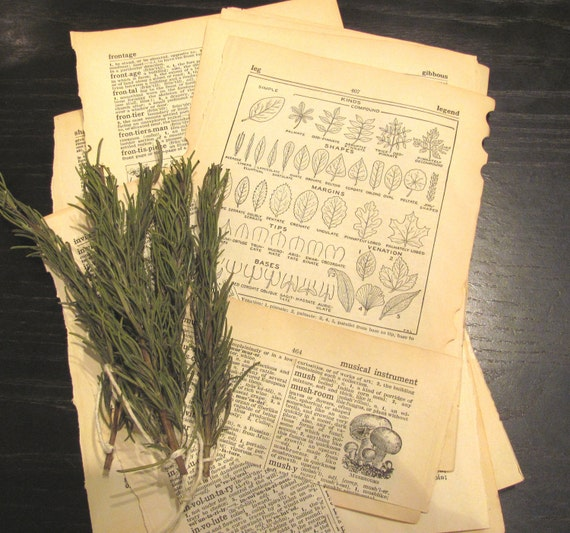 Vintage Tree and Plant Themed Ephemera / 1940s Dictionary Pages