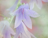 Fairy Flower   Fairy Bella fluer  Blue bells fine art print