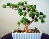 Beaded Plant - Bonsai Tree