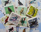 Vintage Bird Edible Image Wafer Paper for Cookies, Cupcakes, Chocolates and Cakes