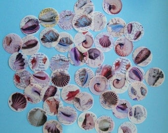Pretty Sea Shell Wafer Paper  40 Images