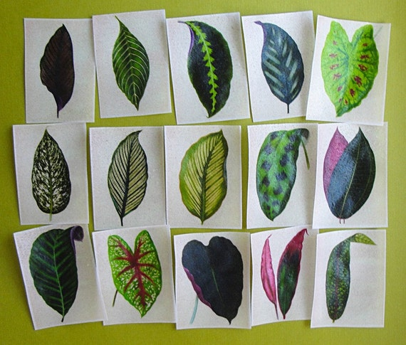 Vintage Botanical Green Leaves edible image wafer paper