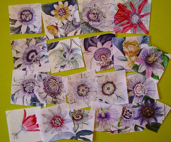 20 STUNNING Passion Flower Edible Image Wafer Papers for your Iced Cookies, Fondant, Cupcakes,Cakes and Chocolate