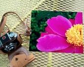 Floral Photography - Fushia Pink Peony - 8X10 Fine Art Print - Nature Photo - Old Fashioned Flower
