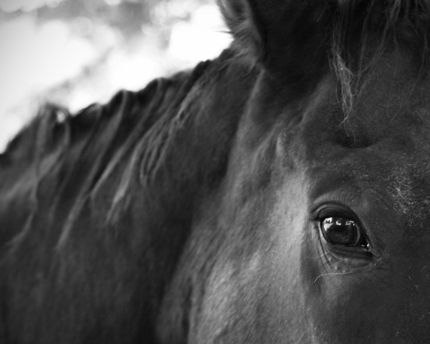 Horse Photography Black and White Nature Animals by ...