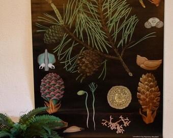 vintage paper canvas pine tree print poster chart