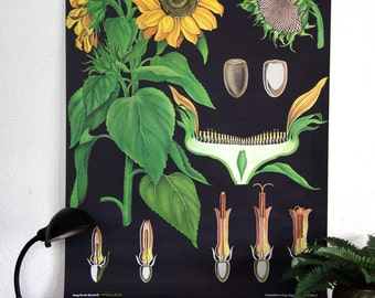 vintage paper canvas sunflower poster chart