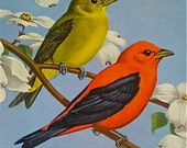 Birds, Print, Home Decor, Vintage, Walter A Weber, Scarlet Tanager, Natural History, Ornithology, Field Museum, 1930s, Ready to Frame