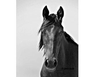Black Horse Portrait - Black and White Horse 8X10 Fine Art Print
