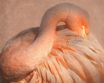 Elegant Pink Flamingo 11x14 Fine Art Print