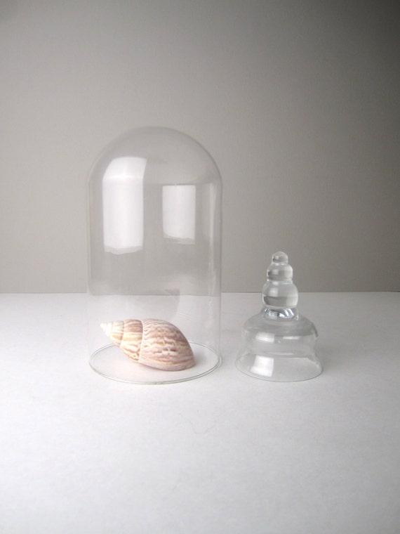 v i n t a g e Large Glass Dome Cloche Terrarium