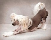 DEMATTING and DESHEDDING Shampoo for Dogs - Puppies - Cats - Kittens - Eco Friendly and Biodegradable
