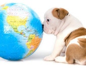 Natural Pet Products Shampoo Hot Spots Deoderizing Decreasing EUCALYPTUS For Dogs Eco Biodegradable tt Unisex Pets Summer
