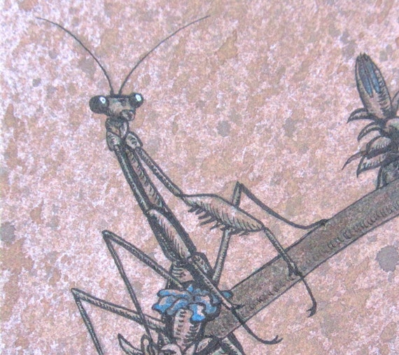 ACEO Mantis on Wild Blue Chicory - Archival Digital Print