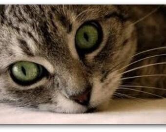 Organic Herbal Pet Eye Wash