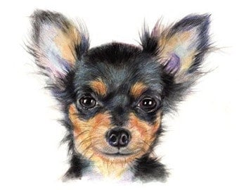 avald Chihuahua 09 Art Print From Watercolor Painting