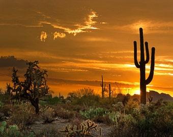 Arizona Photo Peralta Orange, yellow AZ, Phoenix, Saguaro, Cactus Sunset Glory - Fine Art Un-Matted