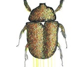 Beetle Drawing - 8 by 10 brown insects nature art - print of pastel painting
