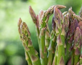 Heirloom Mary Washington Asparagus Seeds