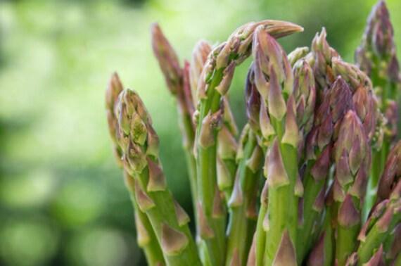 Heirloom Mary Washington Asparagus Seeds
