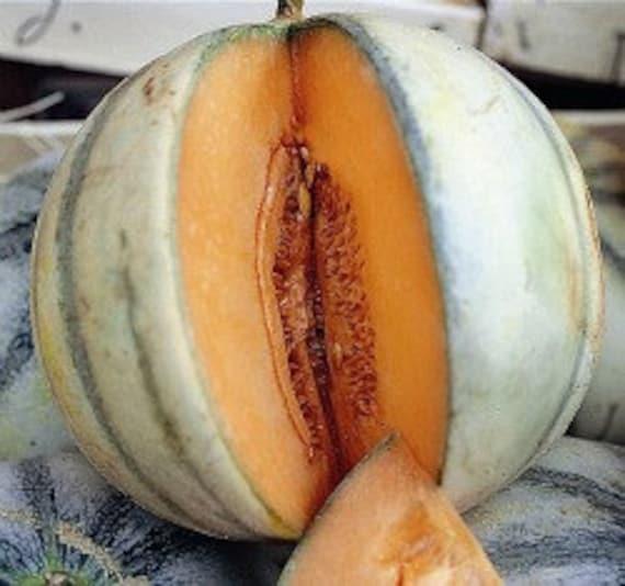 Heirloom Charentais Melon Seeds