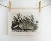 Vintage Art Print Audubon Texas Armadillo Naturalist Wildlife Natural History Black and White Large Western Texas Desert Grey
