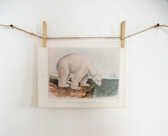 Vintage Audubon Polar Bear Color Print Illustration Naturalist Wildlife Natural History Blue Green Brown White