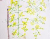 "Golden Shower Flower Watercolor Paintings Original 6.5"" x 10"""