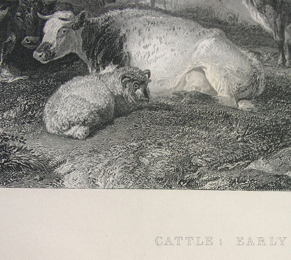 Antique Engraving to frame - Cattle, Early Morning
