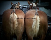 Horse Butts