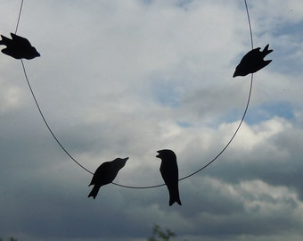 Bird airshow