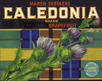 Caledonia Vintage Crate Label, 1930's