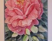 Watercolor Pink Rose with Rain Drops
