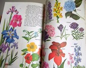 Natural History Book / Golden Treasury / Illustrated Book / Natural Science / Vintage Book / Plants and Animals