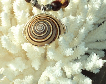 Sundial Shell Pendant Necklace