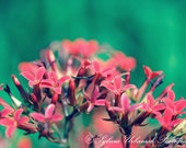 Flower Photography Macro Photography Nature Photography digital Spring Decor Flower emerald  Red Wall Art Fine Art Photography Print