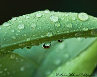 Macro photography nature photography water drop photography  green leaf wall art spring Fine Art Photography Print