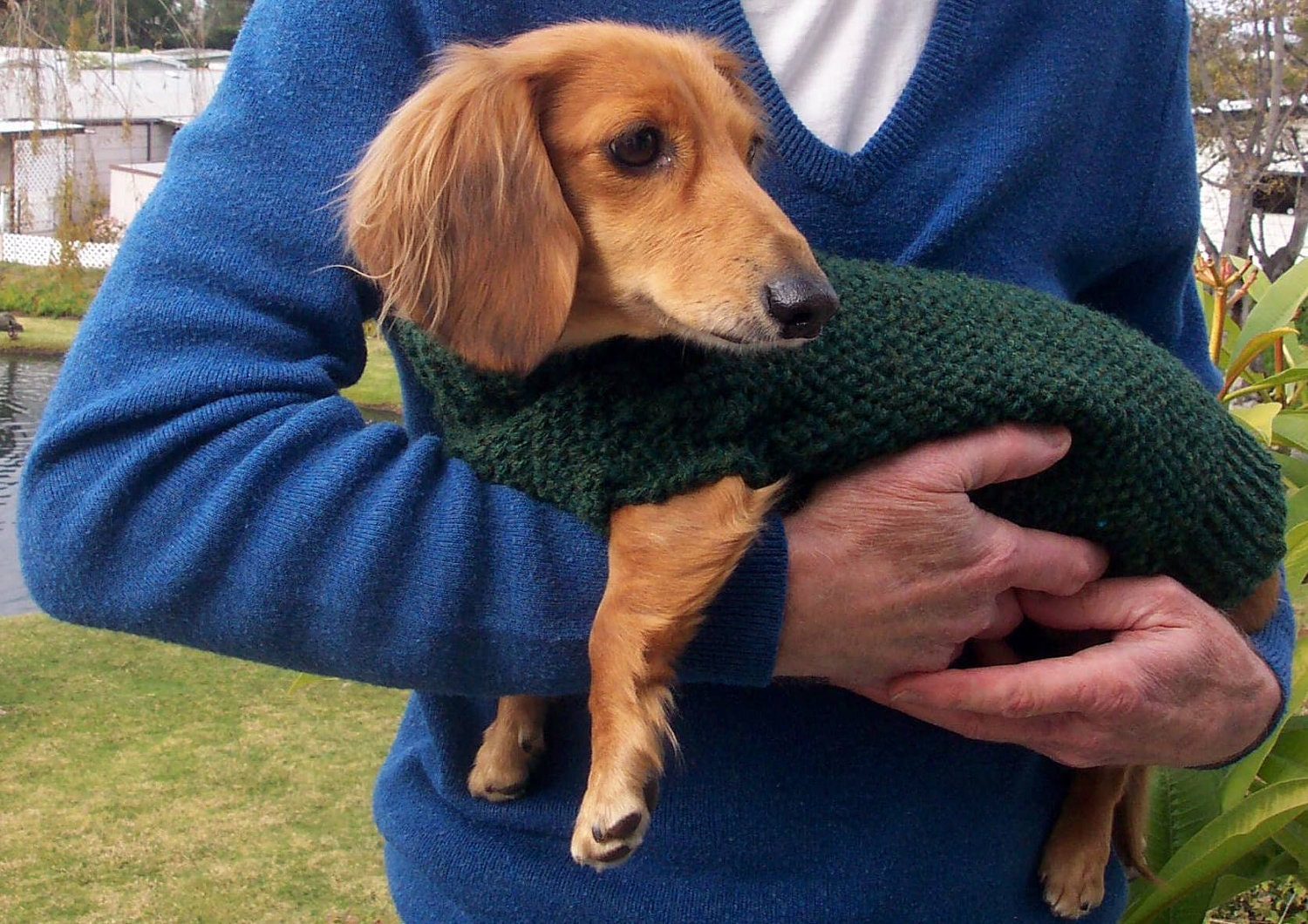 Pdf download knit pattern for miniature dachshund dog sweater bankloansurffo Gallery