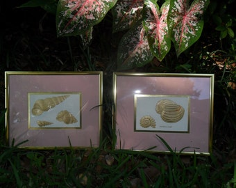 VTG Pair Framed Embossed Gold Seashell Prints Beach Condo Seaside Cottage Beach Vacation