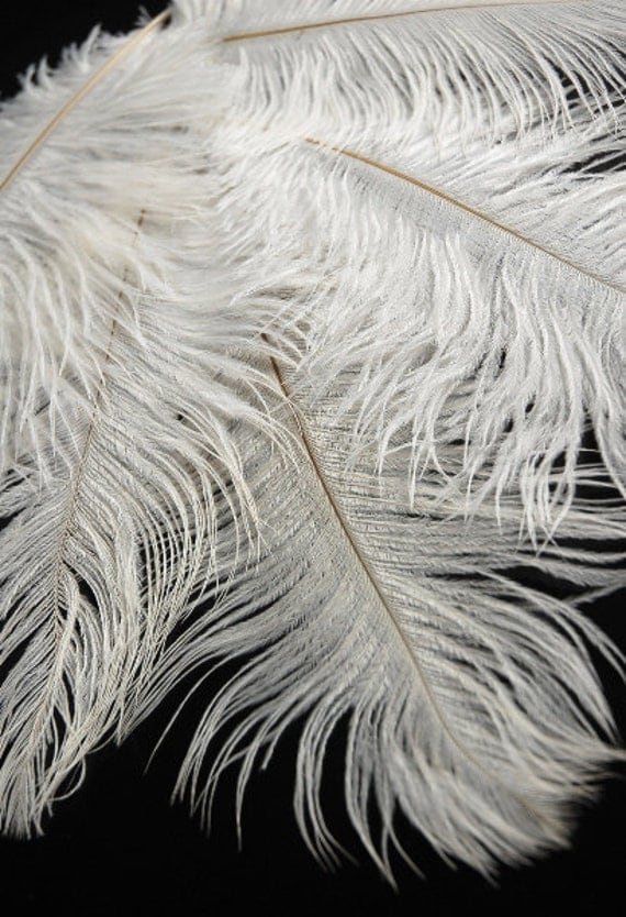 "20-28"" Ostrich Feathers"
