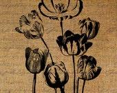 Tulip Tulips Flower Large Floral Botanical Flowers Digital Image Download Sheet Transfer To Pillows Totes Tea Towels Burlap No. 2737